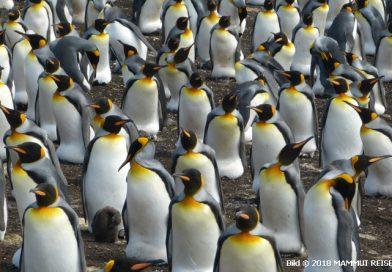 Südamerika und Antarktis im Januar 2020